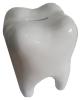 Spardose Zahn